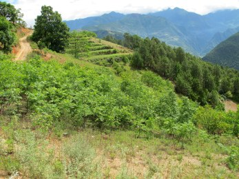 The first wave of walnut planting came under the Returning Farmland to Forest Program, with the government paying farmers to retire farmland and plant trees to control erosion in areas like this. The use of walnuts highlights how the Chinese government has tried to meet both environmental and socioeconomic goals in the face of the difficult trade-offs those goals present.