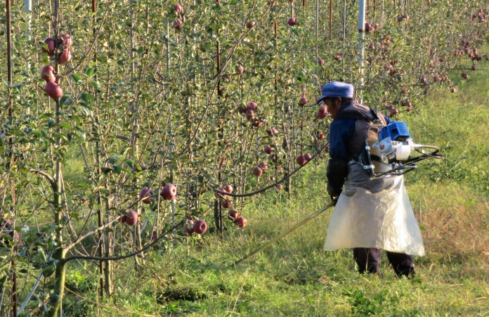 As firms buy up land for apple orchards, former smallholders may find themselves working for wages on land they once farmed themselves.